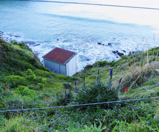 New Zealand-6.jpg